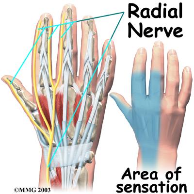 nervi ruke prikaz slika
